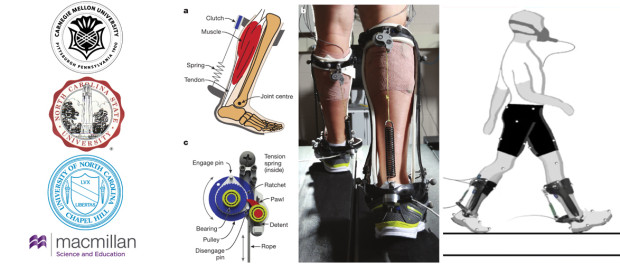 Passive Ankle Exoskeleton For Reducing Cost Of Walking